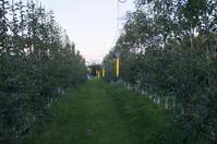 防蛾灯設置 - リンゴ園で想う