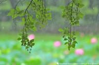 梅雨空 - お花びより