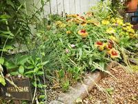 北部九州地方・雨の被害はなく穏やかな朝を迎えています。 - ♪ 路地裏の 小さな庭のつれづれ~♪♪ ♪