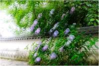 異様にデカイ - HIGEMASA's Moody Photo