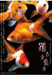 明日から【踊る金魚展 】(^^) - ソライロ刺繍