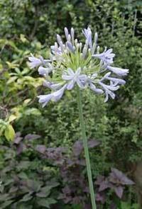 初夏の花のフィナーレ - Lazygardener