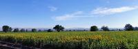 スペイン.グラナダの夏 - 絵のある生活ページワン
