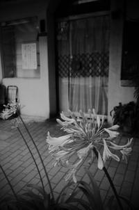 Tokyo Snap 43日本橋本町 - 花は桜木、