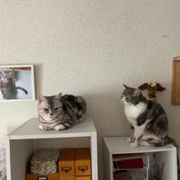 猫のたちの日常 - 土筆の庭