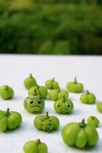かぼちゃ果たち - ~葡萄と田舎時間~ 西田葡萄園のブログ