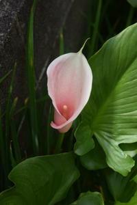 今日庭で見つけた花 - ヒバリのつぶやき