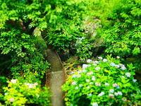 梅雨の庭俯瞰 - 風の香に誘われて 風景のふぉと缶