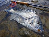 長崎県オフショア・インショアのTEALツアー釣行です。 - Fly Fishing Total Support.TEAL