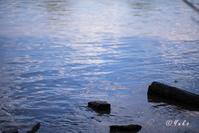水面 / water surface - Seeking Light - 光を探して。。。