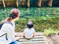 森の中の水族館 - 山谷彷徨
