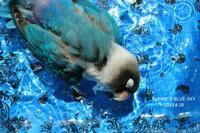 水浴びB.Bの記録(6月18日) - FUNKY'S BLUE SKY