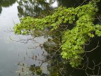 井の頭公園の池Olympus E-1 - M8とR-D1写真日記