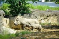 親子その2 - 動物園へ行こう