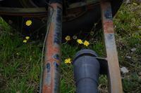 yellow little flowers - フォトな日々