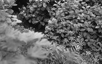 Botanischer Garten Kyoto - ページをめくるように