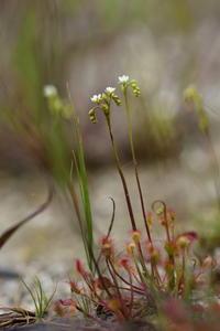 小さい 花とトンボ - ecocoro日和
