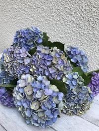 7月初旬の庭のお花たち - 小さな花アトリエ