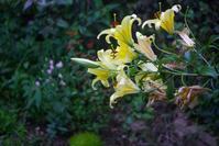 腐る花 - 世話要らずの庭
