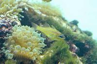 葛西臨海水族園:「伊豆七島の海3」②~浅い海に棲む多彩な魚たち - 続々・動物園ありマス。