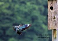 ブッポウソウの繁殖地、岡山県吉備中央町・横山様を初訪問 - THE LIFE OF BIRDS ー 野鳥つれづれ記
