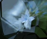 アジサイ 5 - 光 塗人 の デジタル フォト グラフィック アート (DIGITAL PHOTOGRAPHIC ARTWORKS)