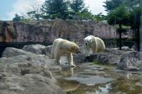 ペア - 動物園へ行こう