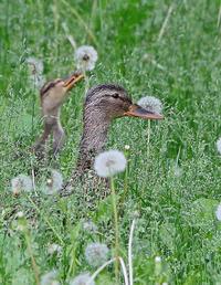 環境が良ければ。 - 季節の野鳥~Wildbirds archives
