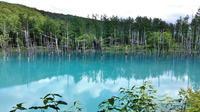 青い池。 - 季節の野鳥~Wildbirds archives