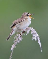 ジャズが冴える。 - 季節の野鳥~Wildbirds archives
