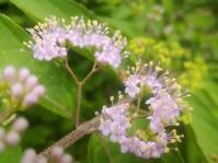 花の願い… - 侘助つれづれ
