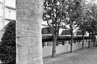樹木の養生と修理不可のカメラケース - 照片画廊