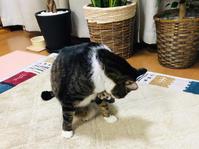 哀しきメタボ - いぬ猫フェレット&人間