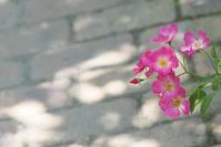 7月6日今日の写真 - ainosatoブログ02