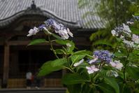 梅雨の合間に紫陽花を見に - ノッツォのホデナス