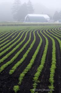 霧朝の緑ライン - ekkoの --- four seasons --- 北海道