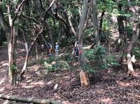 2019年7月7日展望台下の枯れ木伐採 - こうのす里山くらぶ