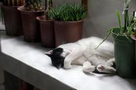寝子 - 鳥会えず猫生活