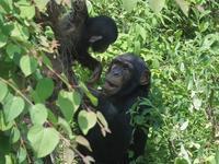 笑顔のニイニ[京都市動物園] - a diary of primates