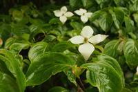 梅雨時の花 - 森と水の記憶
