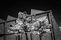 白化する樹木に驚く鋸屋根 - Silver Oblivion