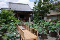 「荷葉団々蓮蕾尖々?-大蓮寺から無鄰菴へ-」 - ほぼ京都人の密やかな眺め Excite Blog版