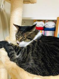 ラーメン屋と病院 - いぬ猫フェレット&人間