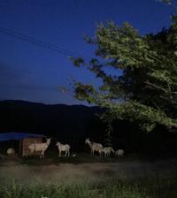 山の上の平屋のリノベ「若い二人の田舎暮らしがはじまりました。」編 - 納屋Cafe 岡山