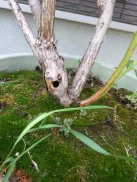 蜂の巣、再び。。。&ブルーベリーの木に穴が(汗) - Petit mame