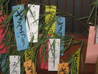 Tanabata - Sternenfest in Japan - Hommage an die japanische Ästhetik im Alltag und einfach umsonst...