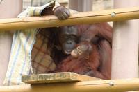 僕はロキ、1歳になりました。若ハゲと言わないでね(多摩動物園) - 旅プラスの日記