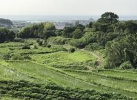 野菜の支えの竹を切りに山に上がる - 島暮らしのケセラセラ
