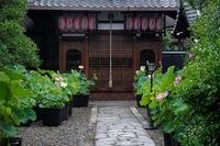 雨上がりの蓮@行願寺 - デジタルな鍛冶屋の写真歩記