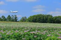 お花のサンドイッチ~旭川空港~ - 自由な空と雲と気まぐれと ~from 旭川空港~